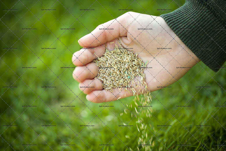 Как правильно посеять и посадить газон на даче своими руками 52