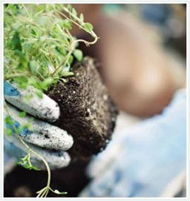 soil-mulch-stone