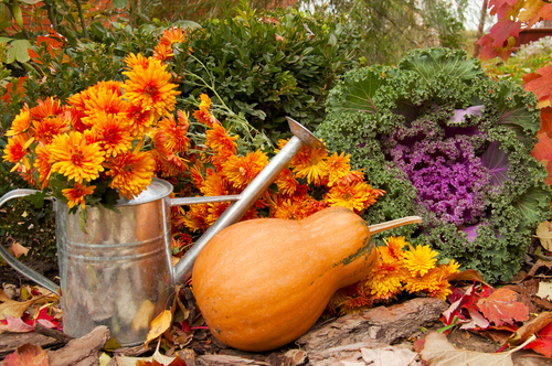 what-to-do-in-the-garden-in-october_3_n