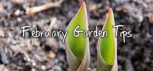 february-garden-tips