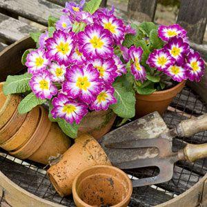 54cb2e1eb4fae_-_spring-garden-0314-de