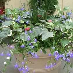 year-round-container-gardening-2