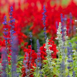 patriotic-garden-2