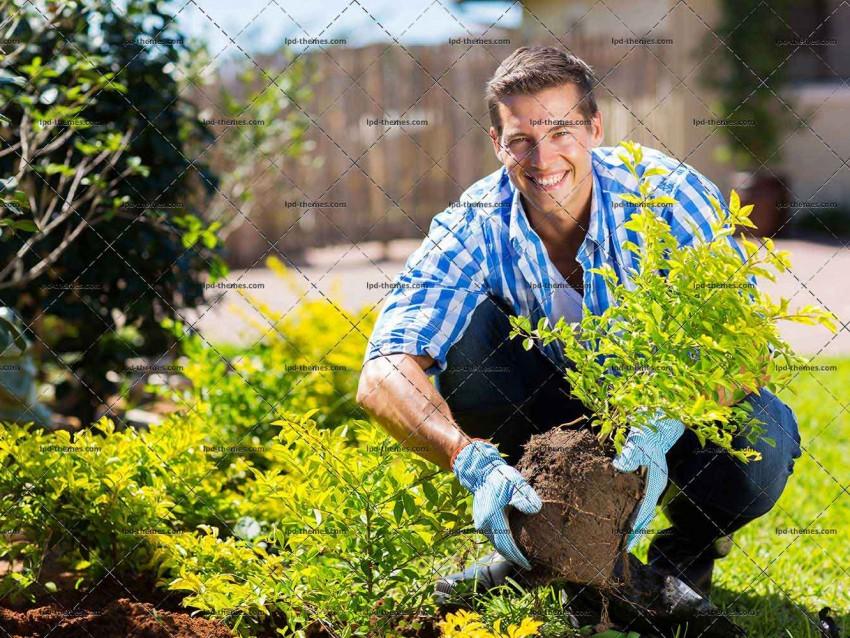 Young Man Gardening