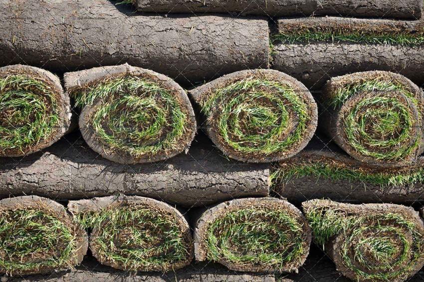 Green Grass Sod